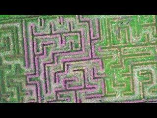 В Гуйчжоу построен лабиринт из цветов длиной 160 метров
