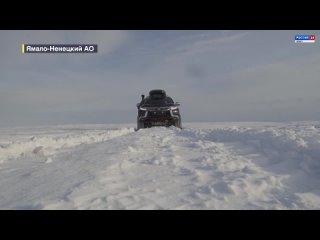 Столичные автопутешественники добрались до самой северной точки Ямала и встретились с медведем