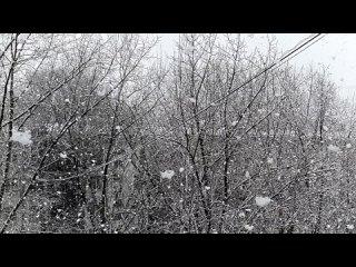 Москва. Снегопад 2 апреля 2021 года. Сверхзамедленная съемка.