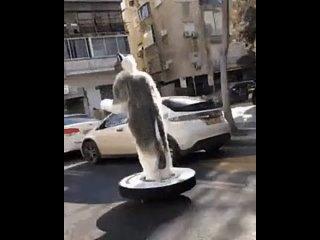 Ничего необычного, просто кот едет на пылесосе по городу