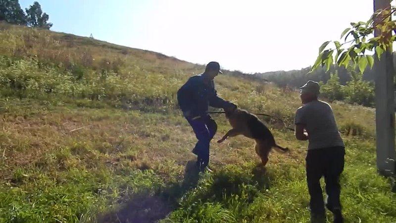 Прикладное обучение на защиту за пределом возможностей собаки