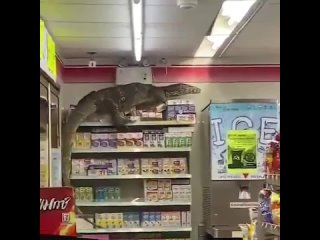 В Таиланде гигантская ящерица напугала покупателей в магазине