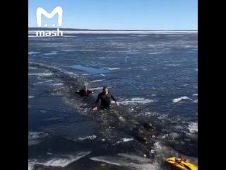 Спасение собак в Петрозаводске
