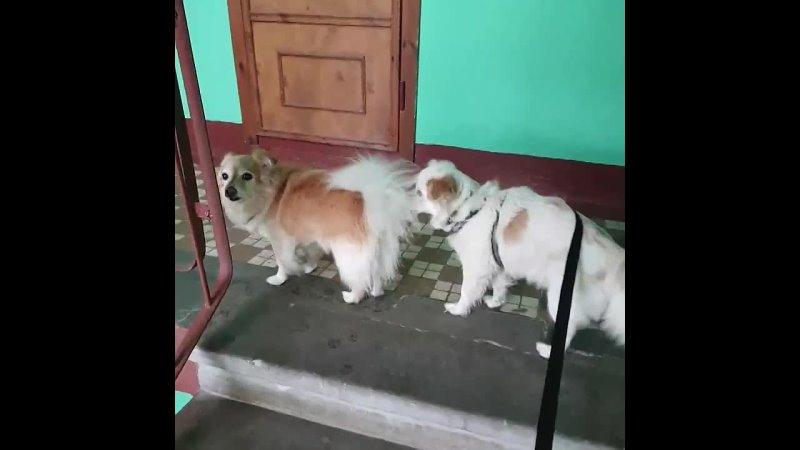 Каффи и Пиф возвращаются с прогулки