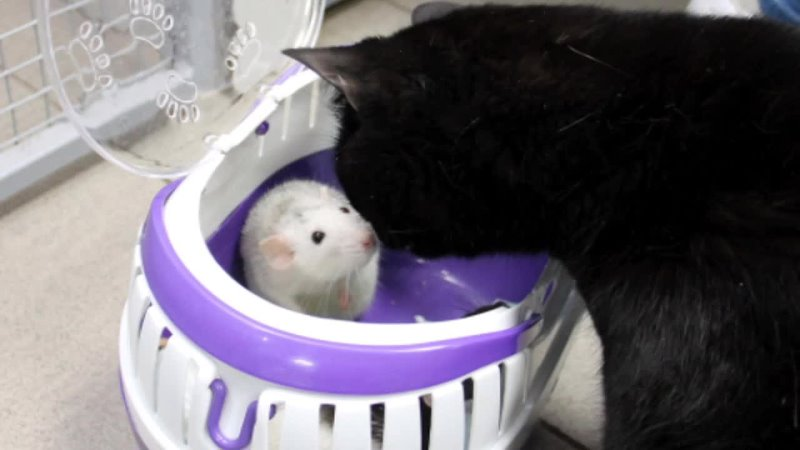 Жизнь особенного кота mp4