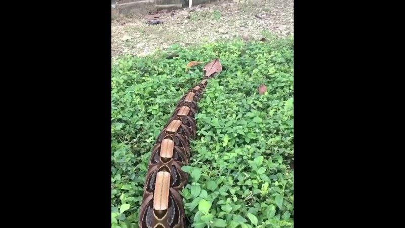 Змея Animal Planet