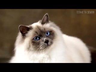 Самые красивые, любимые и домашние породы кошек. Интересные факты о кошках