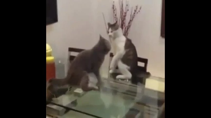 Кот-борец rjn-,jhtw