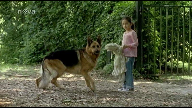 Комиссар Рекс 14 сезон 2 серия В волчьем логове 2011 год
