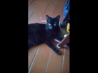 Сегодня, я искупала своего котю Барсика, которого я приютила 8 месяцев назад. Были крики, драки, вой, бой, глаза-блюдца вопрошал