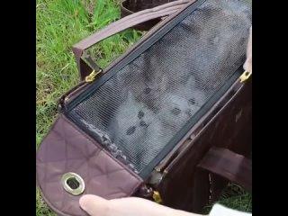 Котята на экскурсии =3
