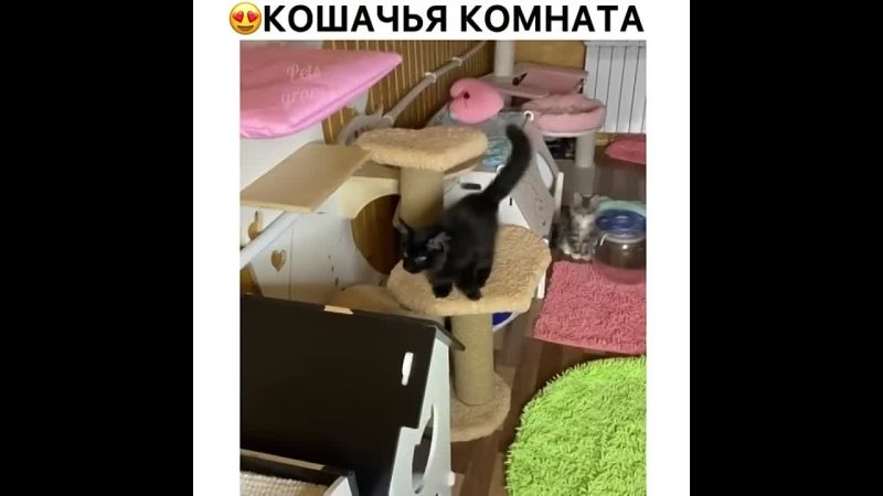 Я представляю какой там кошачий туалет
