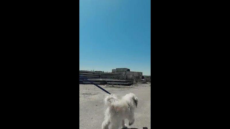 Видео от Викентия Сидоренко