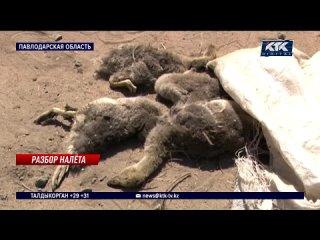 «Это пытка»: кровососы атаковали людей и животных в Павлодарской области