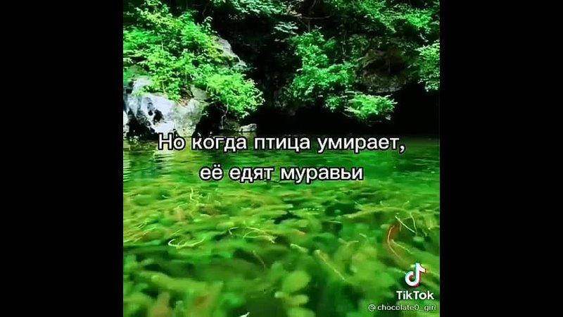 Видео от Лидии Смирновой