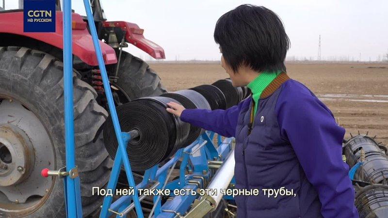 Особенности посевной хлопка в Синьцзяне
