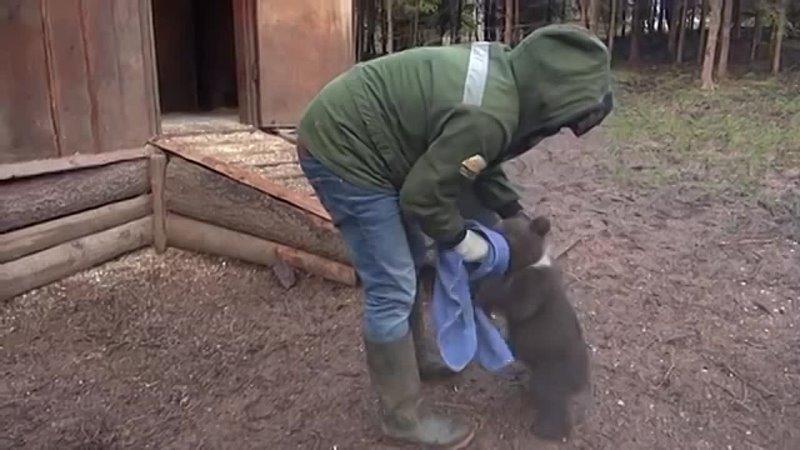 Мохнатые Сироты Медвежата