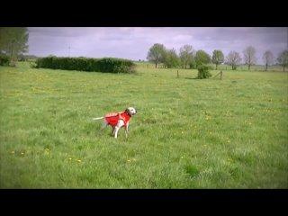 Видео от Компания «Мировые Охотничьи Технологии»