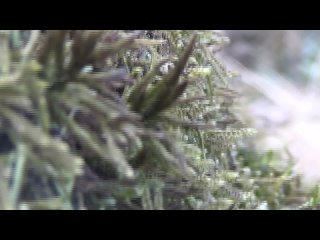 Завораживающая красота мха, трав и листьев