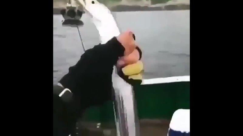 Эта удивительная зеркальная гладкая рыба или рыба мороз Frost fish в длину достигает 2 х метров но весит всего 3 4 кг