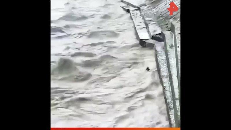 Спасение теленка РЕНТВ