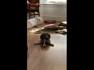 Puppy trying her best to convince the cat to play with her