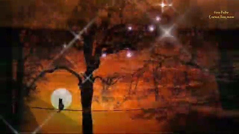 Добрый Вечер Желаю вам Красивого и Уютного Вечера в кругу Друзей и Близких mp4