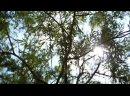 ПРОСПЕКТ ТРУДА – «НЕ БЕЙ» Official video