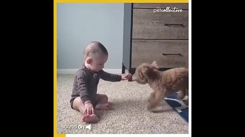 игра собакена с 7 ми месячным бэйби