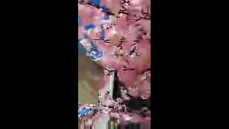 2021 04 05 Cafe PLENO lica25s видео в Instagram