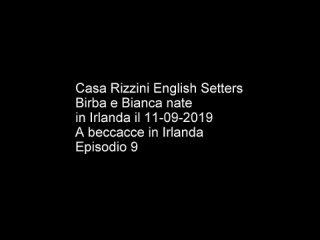 Ep. 9_20_ Setters e caccia beccacce in Irlanda - English Setters and snipes in Ireland (720p).mp4