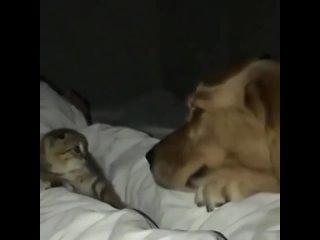 Просто все любят котят