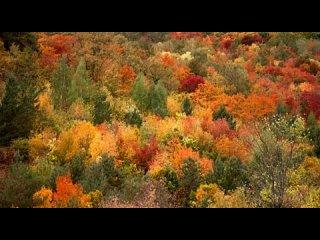 Осень в Ширяево