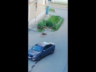 Video by СОБАЧЬЕ ДЕЛО    УЧАЛЫ