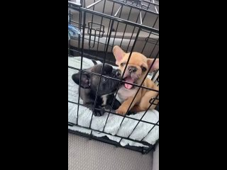 What are these two cuties names? And they are beating jerks trying to eat each other