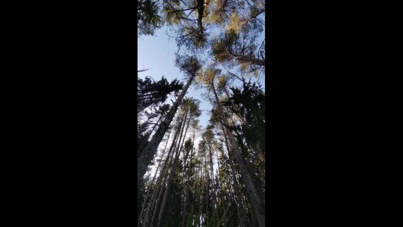 Лес. Гатчина. Весна 2021лесгачинавесна