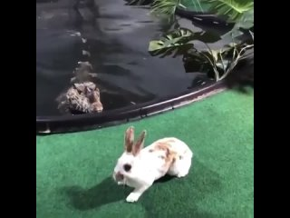 Бедный кролик был обречен!