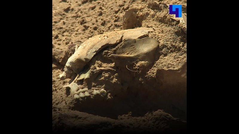 В поселке Тельмана за неделю обнаружили останки 53 солдат павших в годы Великой Отечественной войны