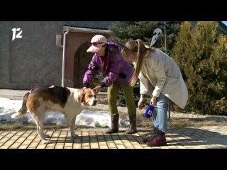 В Омской области в силки и капканы, расставленные на ондатр и бобров, всё чаще попадают домашние кошки и собаки