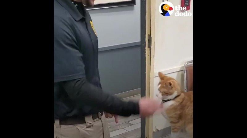 дом этого кота полицейский участок и его любимое занятие отвлекать начальника полиции когда он заполняет табели учета ра