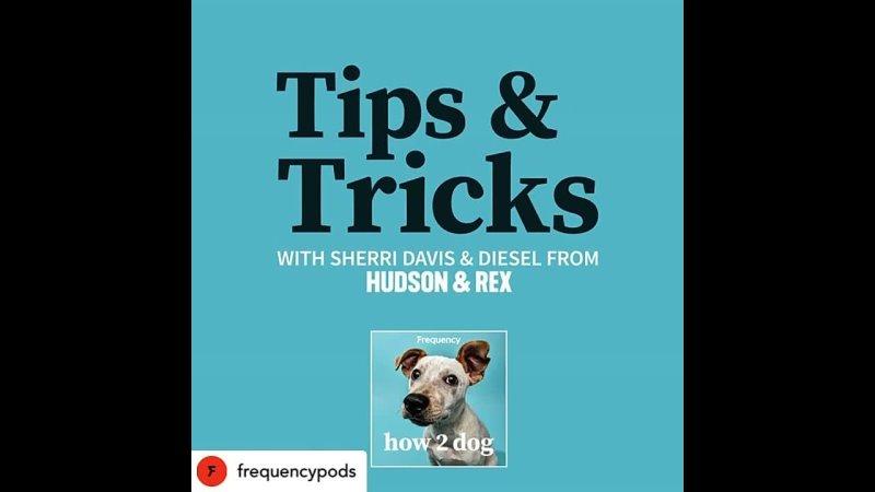 How2Dog Tips Tricks with Sherri Davis Ep 10 ENG