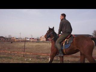 Покупка первых коней