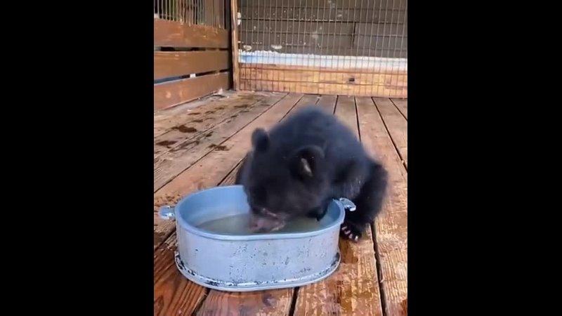 Водяной мишка 480p mp4
