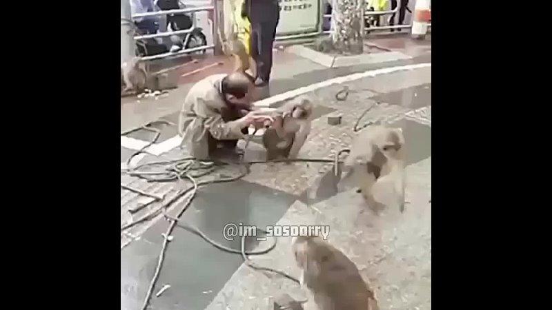 планета обезьян приквел