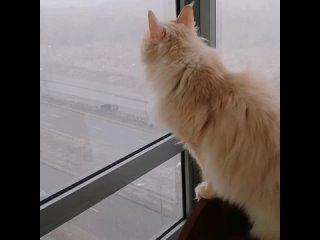Лилу в шоке 🙉опять зима 😂