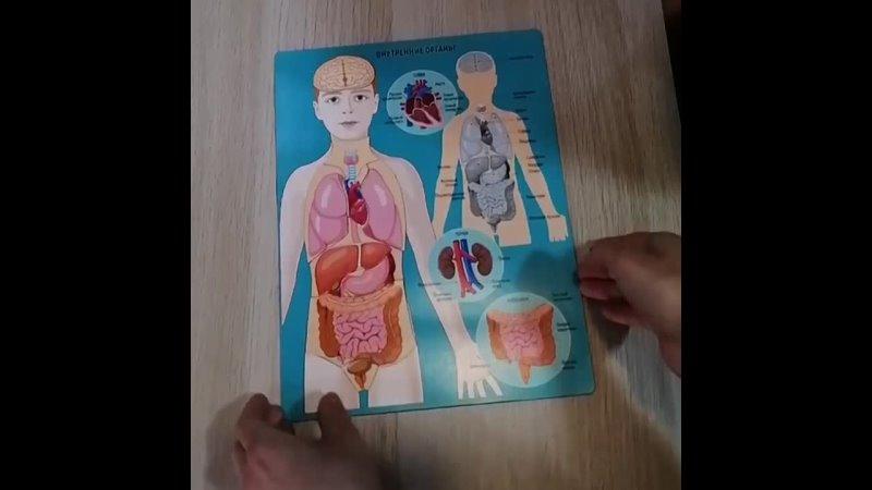 Обзор пособий по анатомии