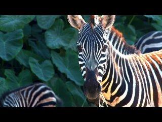 Коллекция красочных диких животных ( 1080 HD )