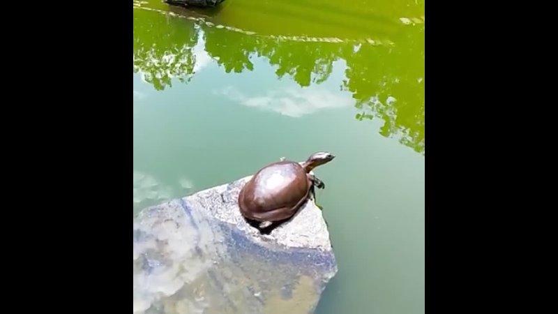 Черепаха делает утреннюю растяжку