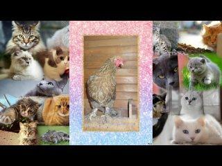 видеоролик про домашних животных часть 2