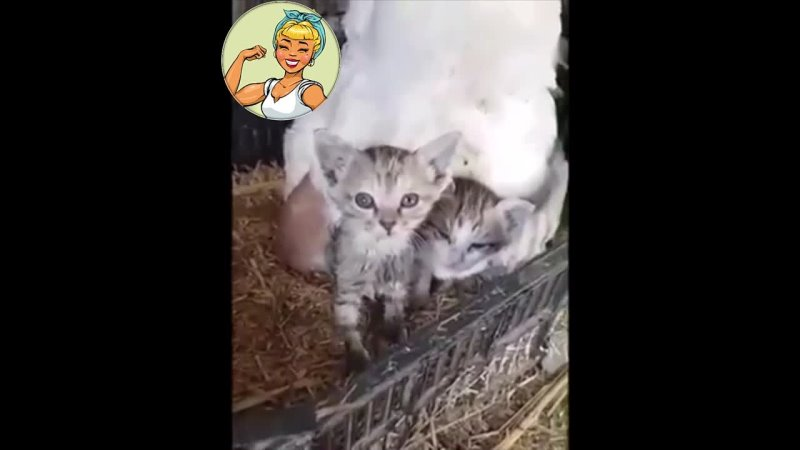Пернатая мамочка